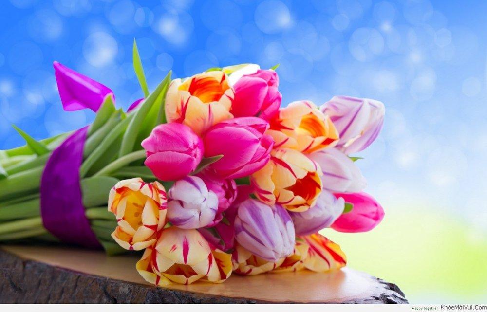 anh-dep-hoa-tulip-20.jpg
