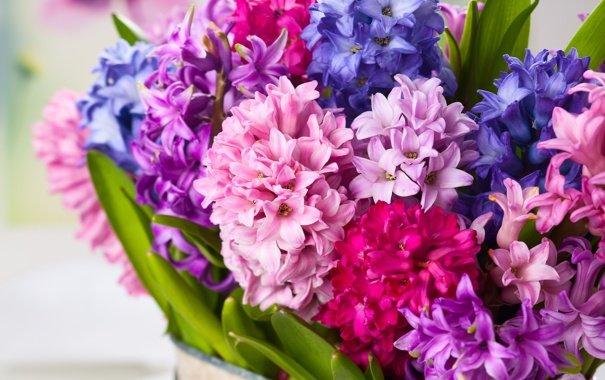 cvety-giacinty-buket-flowers.jpg