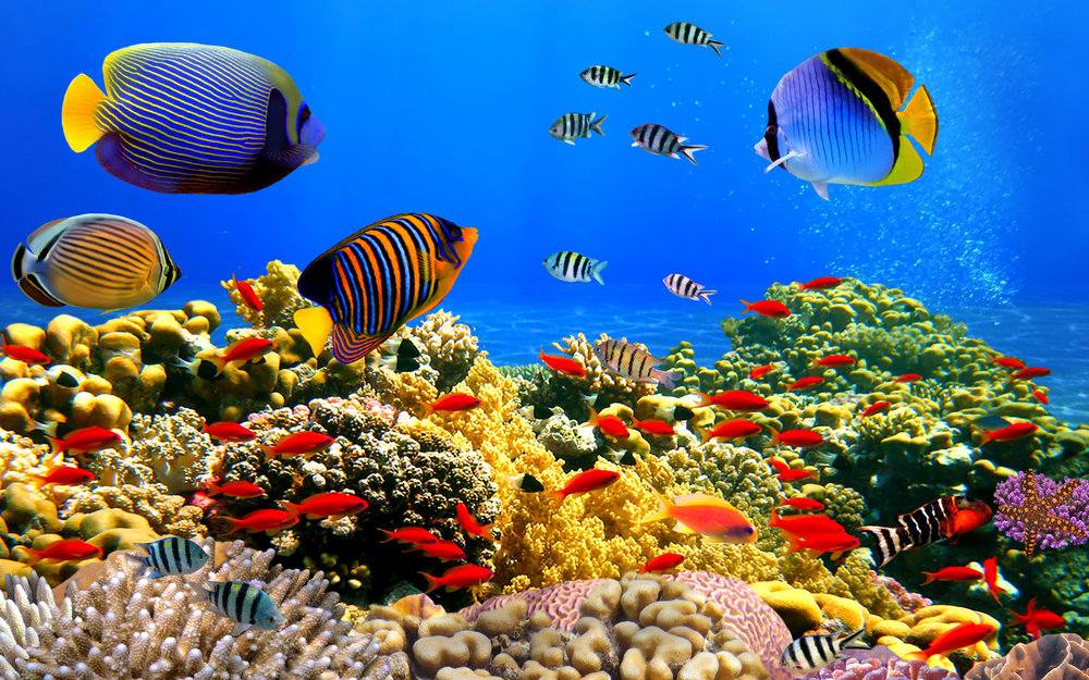 underwater-world-clean-water.jpg