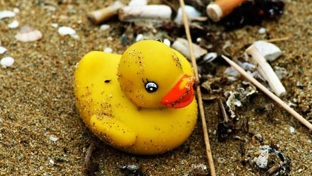 duck.jpg.653x0_q80_crop-smart.jpg