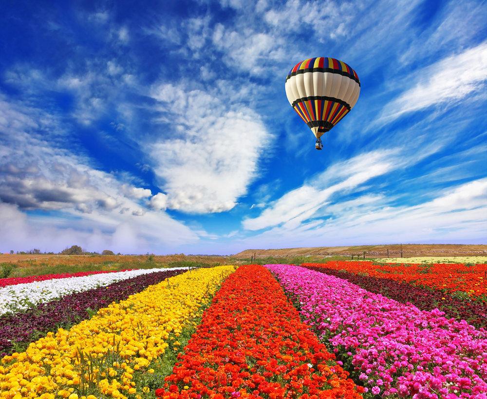 Fields_Ranunculus_Sky_499298.jpg