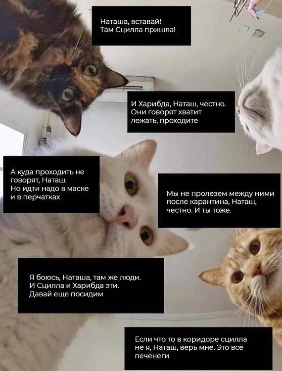 На изображении может находиться: кот и текст