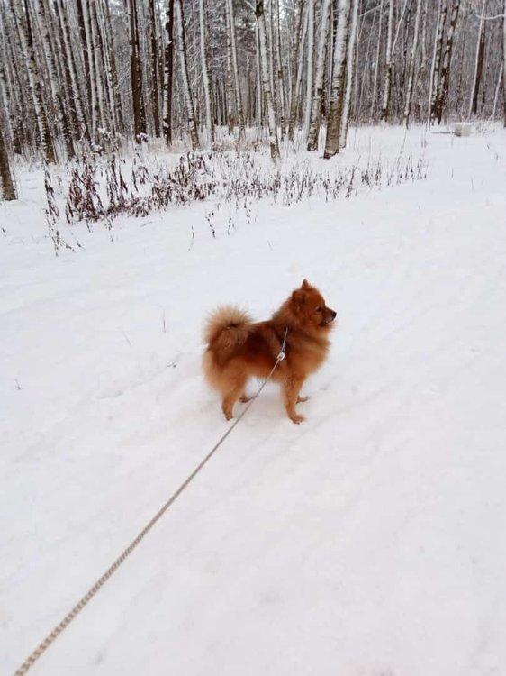 На изображении может находиться: собака, на улице и природа