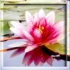 zveto4ek